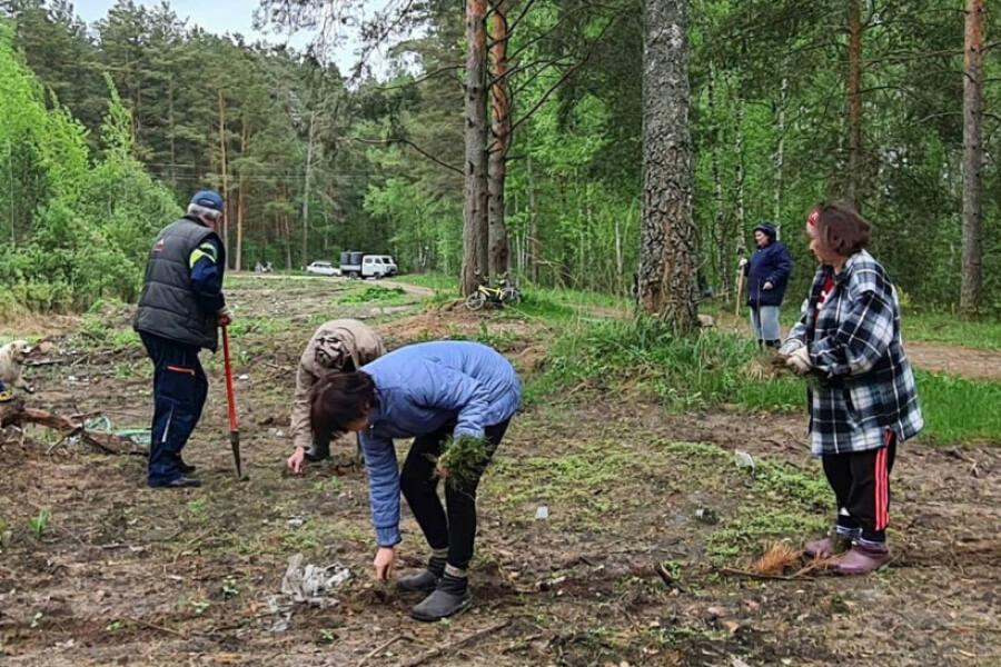 На месте нелегальной добычи песка посадили молодой лес