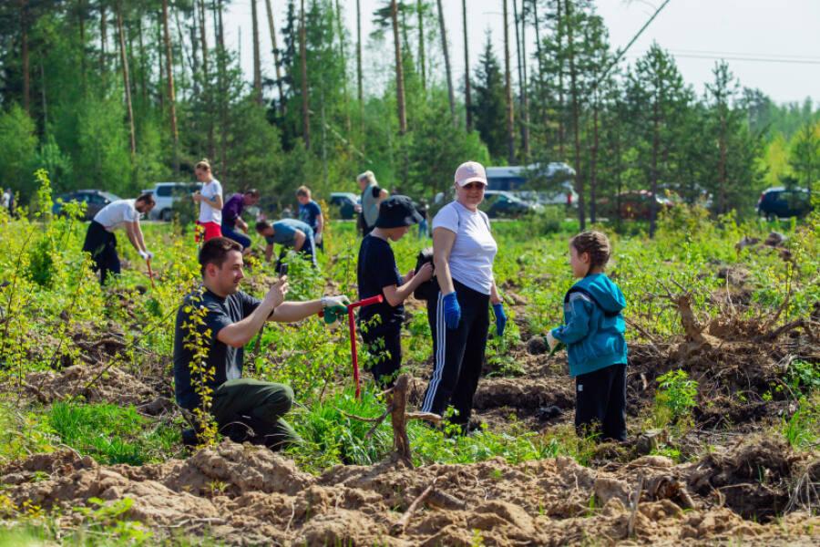 В Орехово-Зуевском городском округе прошла акция «Лес Победы»