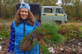 В округе завершились волонтерские посадки леса