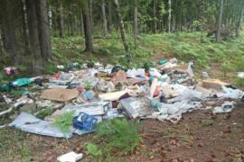 Виновному в создании свалки пришлось навести чистоту в лесу