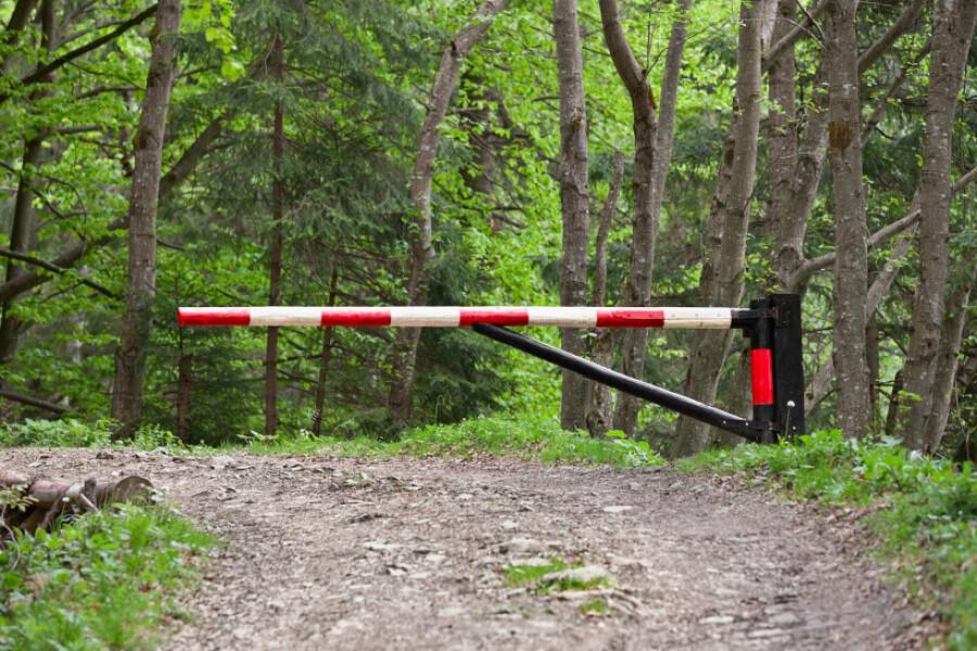 В Подмосковье ограничили посещение лесов до 19 июля