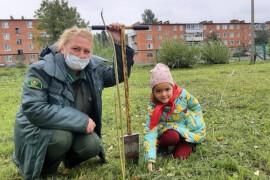 У школы в деревне Савинская теперь будут расти сосны